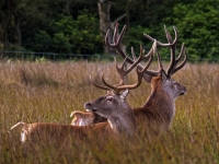 2 stags Longshaw