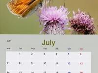 08-h1-july