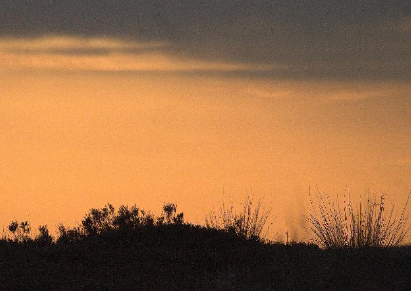 y-sunset