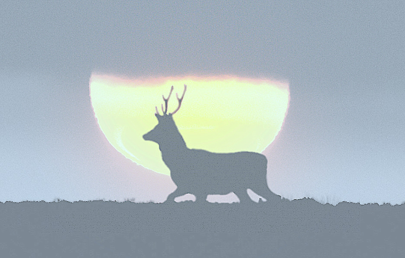 yy-deer-sunset