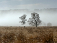 Mist on Leash Fen