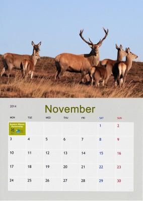 November_edited-2
