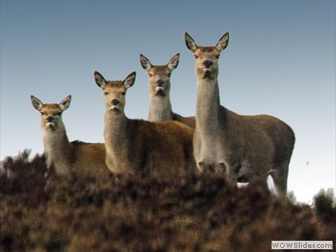 37-deer_edited-1